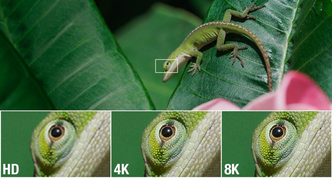 lizard_resolution_2-1080x578